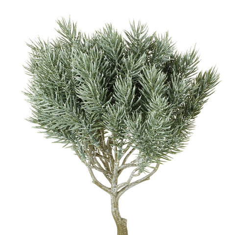 Small Frosted Pine Spray