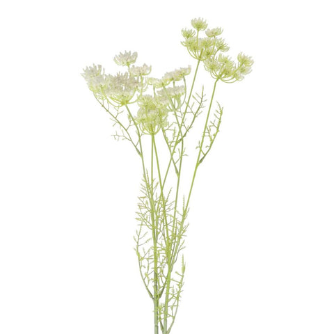 Cow Parsley Spray