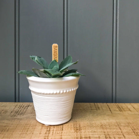 Livia Mini White Ceramic Pot