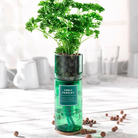 Hydro Herb Kit - Curly Parsley