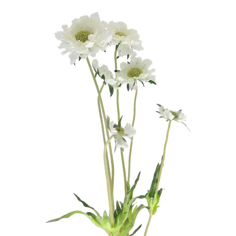 White Scabiosa Spray