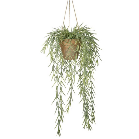 Potted Hanging Willow Plant