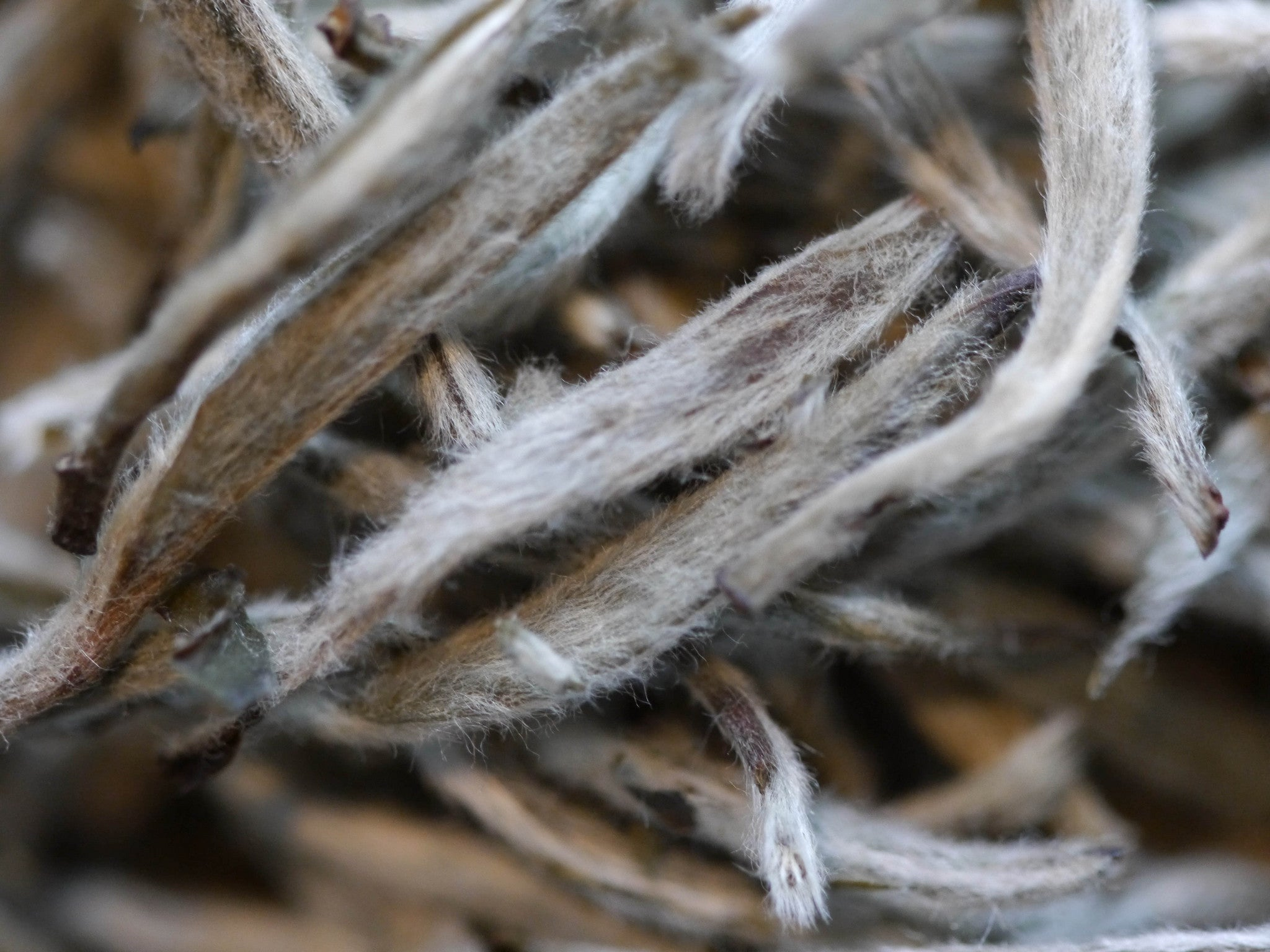 Silver Needle Tea: 100% Fluffy Tea Tips