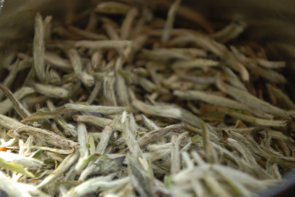 White Tea: The Basics