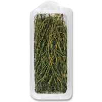 ONE BUNDLE THYME
