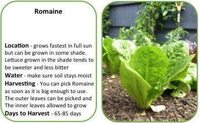 VeggiePOPS! Romaine - 3 Pack