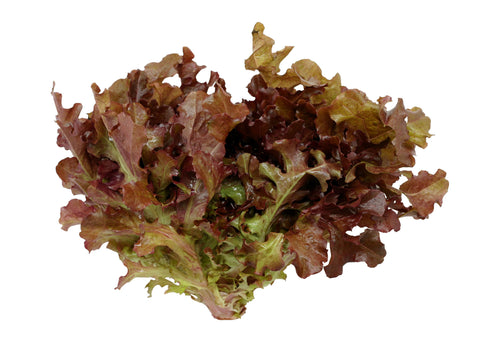 Lettuce, Red Leaf/  . . . . . . . . Ctn, 1 1/9 bu, 15 ct/ Available: Apr.-June; Oct.-Dec.