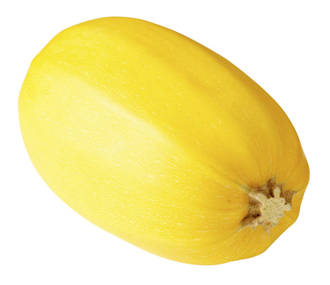 Squash, Spaghetti/  . . . . . . Ctn, 1 1/9 bu, 35 lbs/ Available: Sept.-Jan.