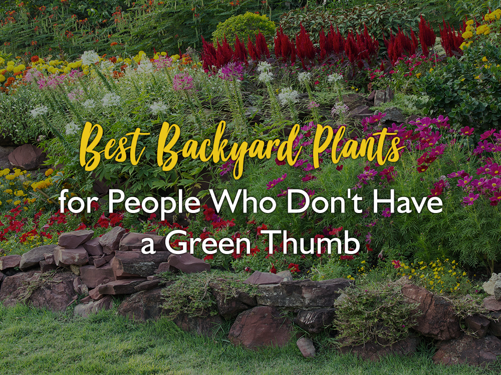 Best Backyard Plants for People Who Don't Have a Green Thumb