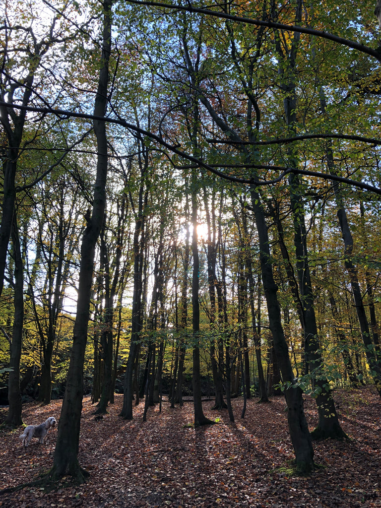 Autumn Sun Through the Trees photograph by Ange Sewell at Weft Blown