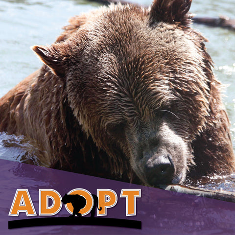 Adopt: Grizzly Bear