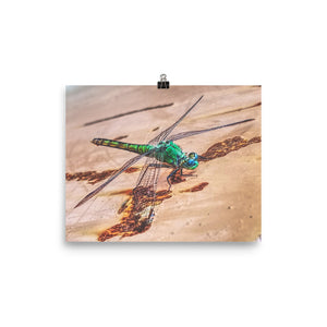 Dragonfly Poster i PHOTO 360 by Tom Tate - TaterSkinz