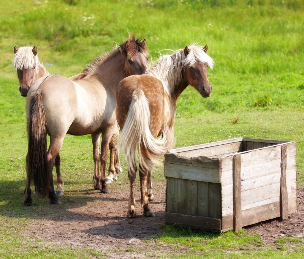 What's the Deal With Slow Feeders For Horses?