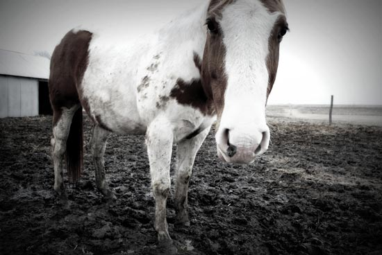Why Horse Owners Should Care About Climate Change