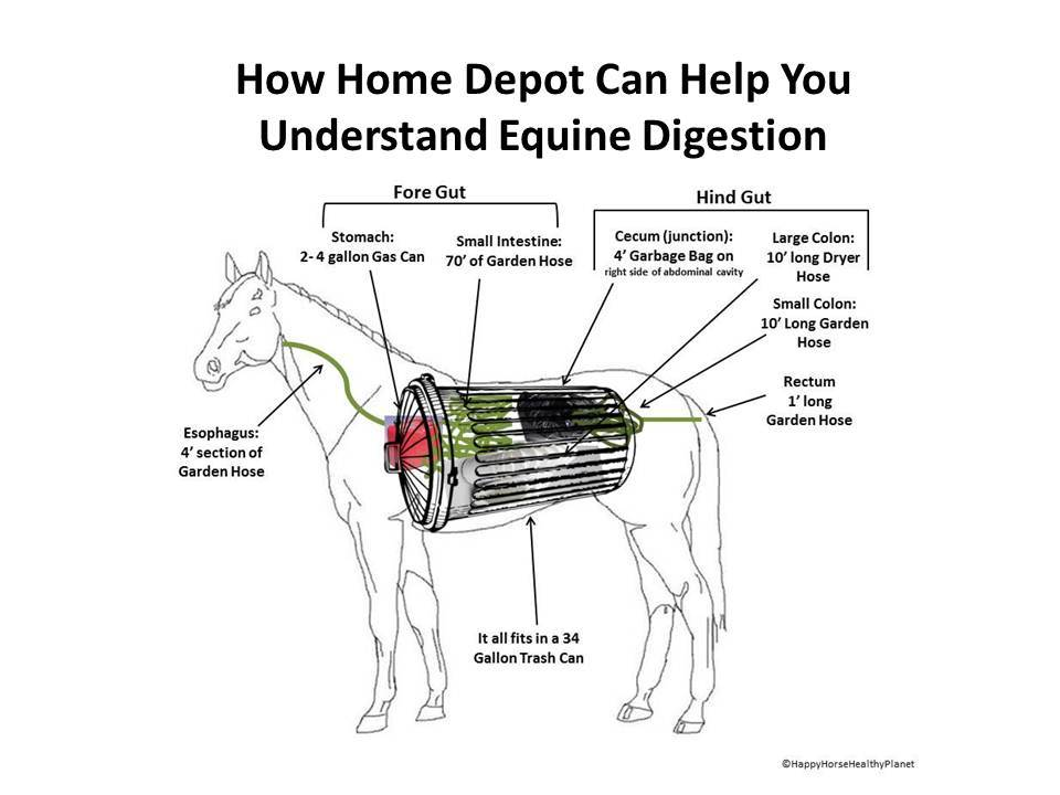 How A Trip To Home Depot Will Help You Understand Equine Digestion