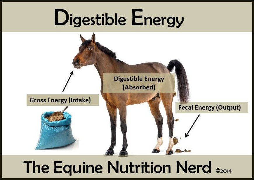 Digestible Energy in the Equine Diet PDF