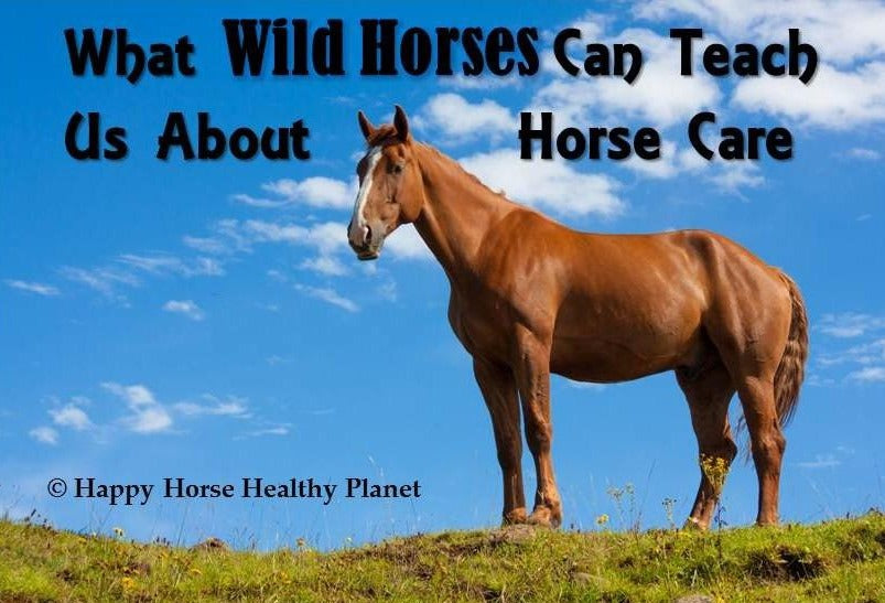 What Wild Horses Can Teach Us About Horse Care PDF