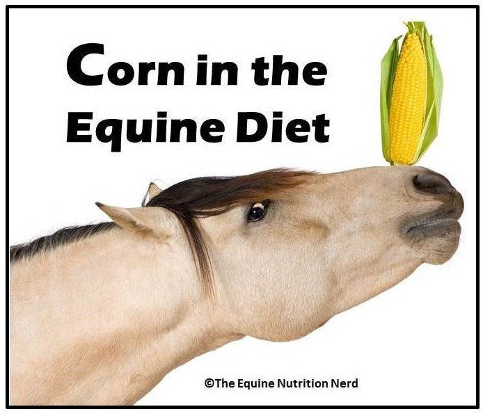 Adding Corn To Your Horse's Diet PDF