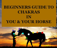 A Beginners Guide To Chakras For You and Your Horse PDF