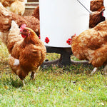 Horizontal Side Mount Chicken Waterer