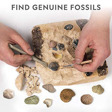Load image into Gallery viewer, NATIONAL GEOGRAPHIC Mega Fossil Dig Kit – Excavate 15 Real Fossils Including Dinosaur Bones & Shark Teeth, Educational Toys, Great Gift for Girls and Boys, an AMAZON EXCLUSIVE Science Kit - CHARMERRY