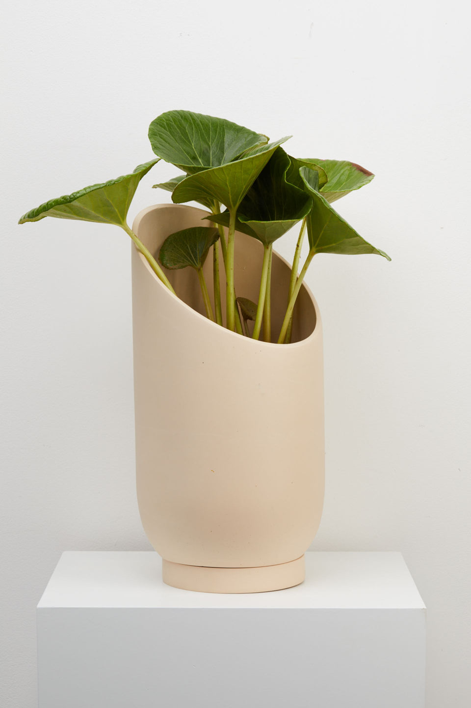 Large Summit Planter Plant Pot in Fossil by Capra Designs