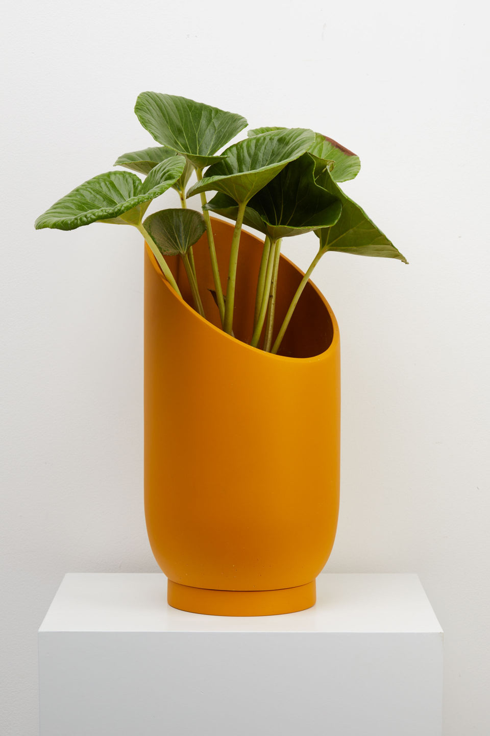 Large Summit Planter Plant Pot in Golden by Capra Designs
