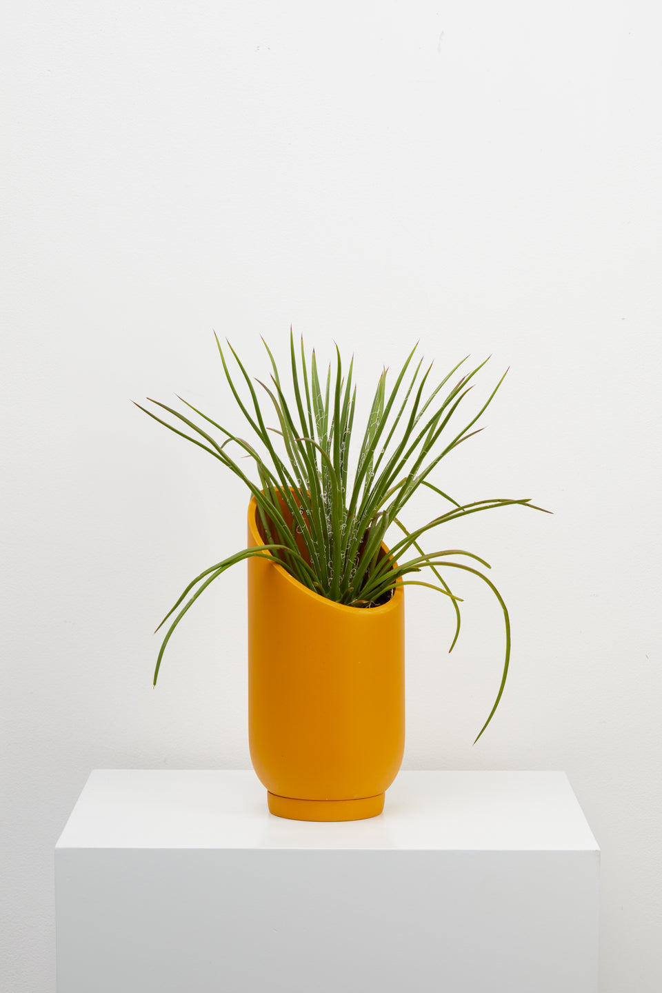Small Summit Planter in Golden by Capra Designs