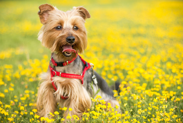 Pet-Friendly Plants For Spring