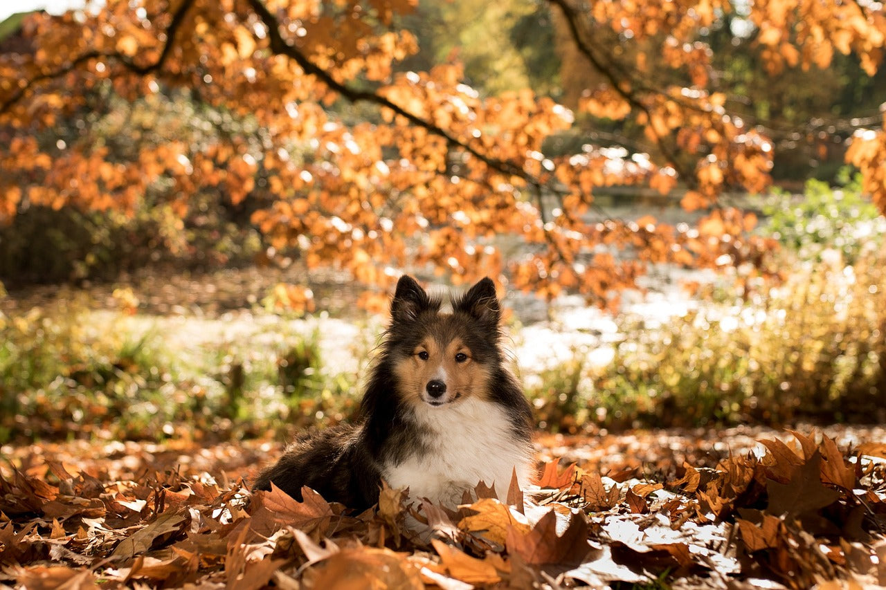 13 Pup-tivities To Enjoy Autumn Together