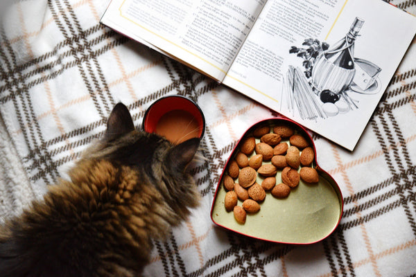 cat, book, nuts, tea on bed