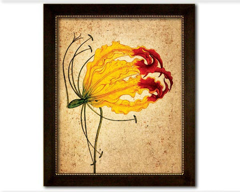 Study of a Flame Lily. Reproduction of an antique painting from Mughal India. Faux Canvas Frame. Overall Frame Size 24.5 x 19 inches.