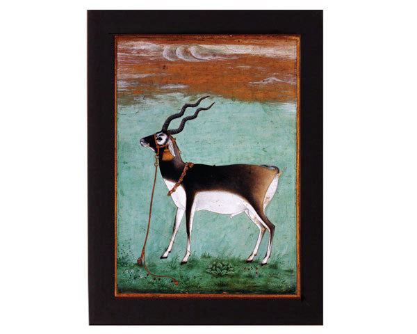 Study of a Black Buck. Mughal India. Overall frame size 6 x 8 inches.