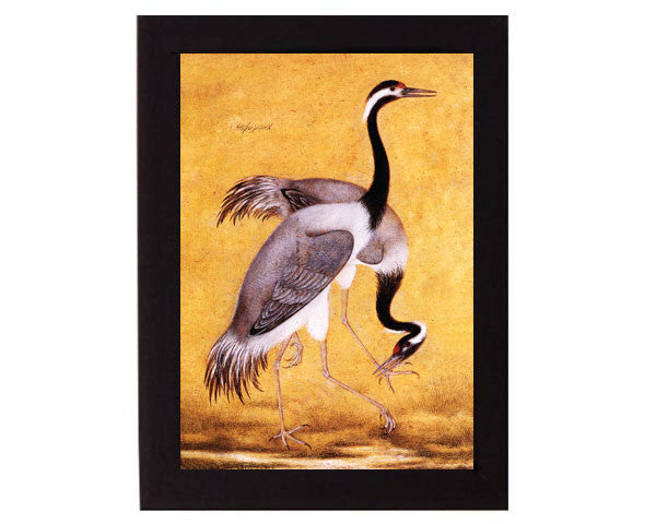 Study of a pair of Cranes. Mughal India. Overall frame size 6 x 8 inches.