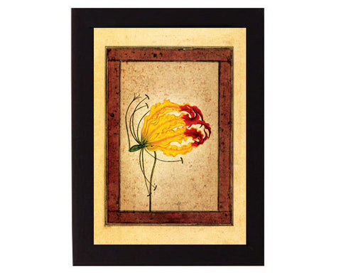 Study of a Flame Lily. Mughal India. Overall frame size 6 x 8 inches.