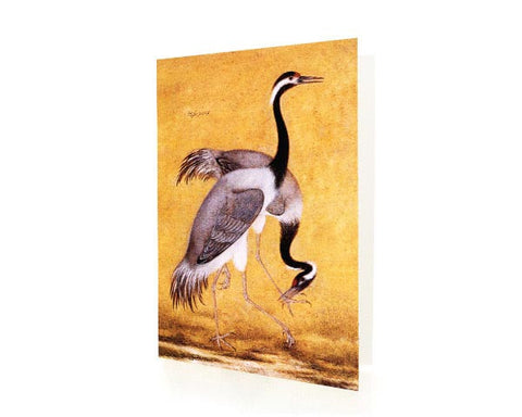 Study Of A Pair Of Cranes.  BLANK GREETING CARD. Printed on Extra Heavy Paper Stock.