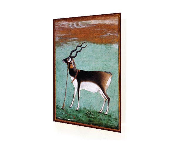 Study Of A Black Buck.  BLANK GREETING CARD. Printed on Extra Heavy Paper Stock.