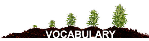 growing marijuana vocabulary
