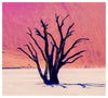 Deadvlei Tree Namibia