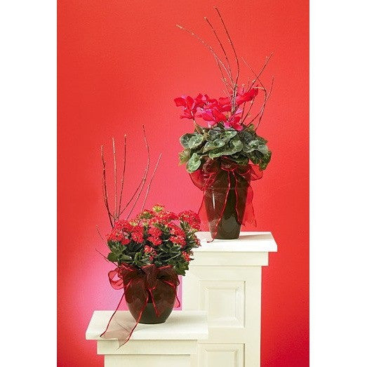 Red Decorated Blooming Plants and Ribbon - Flowers by Pouparina