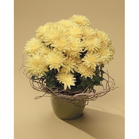 Yellow Chrysanthemums with Curly Willow - Flowers by Pouparina