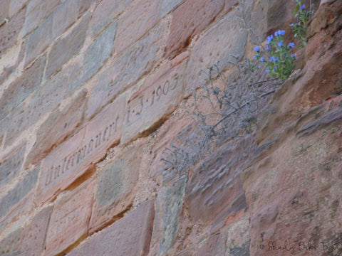 This is a close up photograph of the bricks that make up an exterior wall.