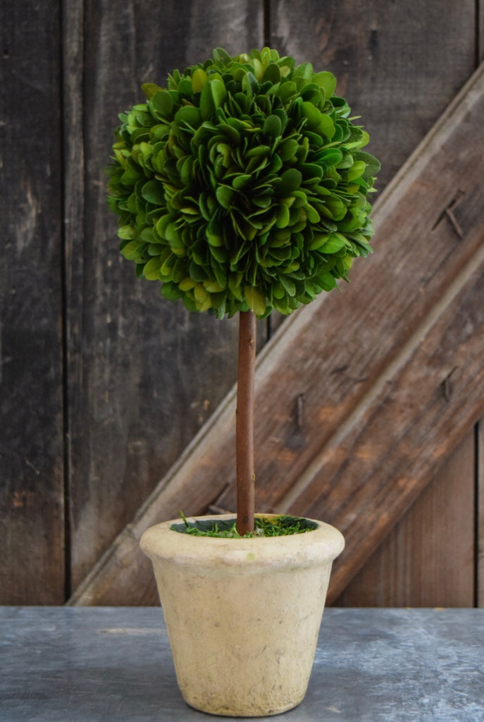 Country Manor Boxwood Topiary Collection