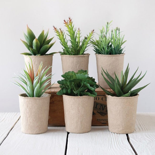 Succulents in Paper Pot