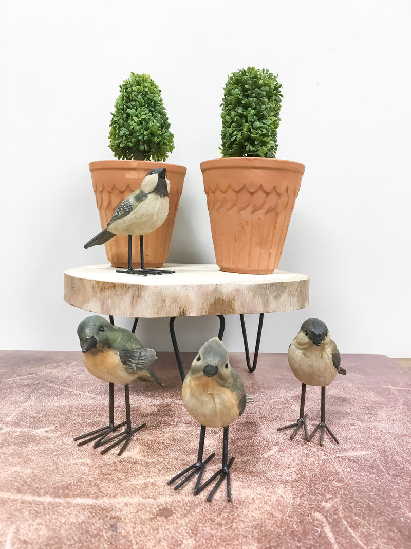Backyard Bird Set