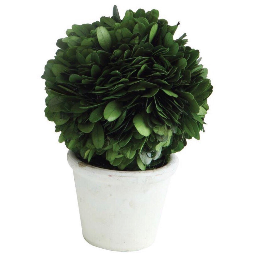 Country Manor Potted Boxwood Collection