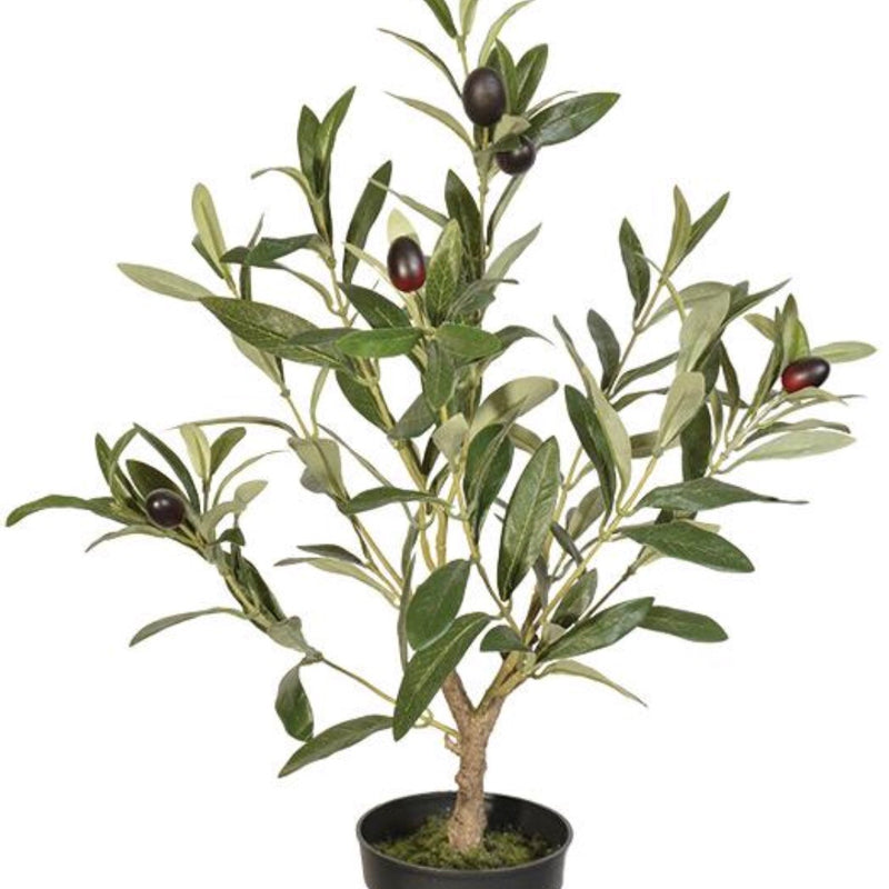 Olive Topiary with Pot