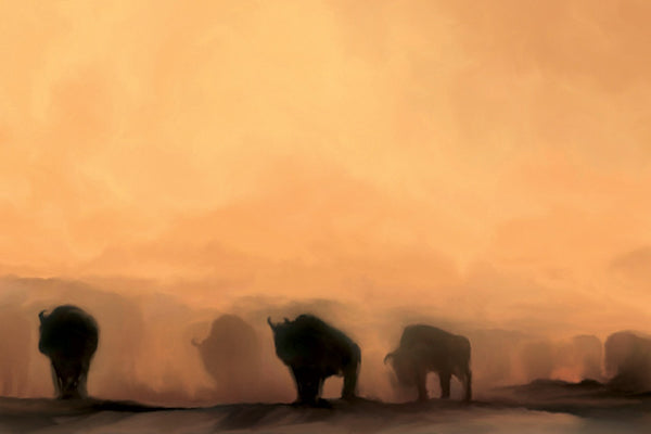 """Buffalo at Dusk""  Fine Art Print"