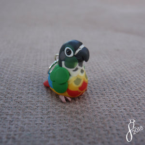 Yellow-Sided Green-Cheeked Conure Charm