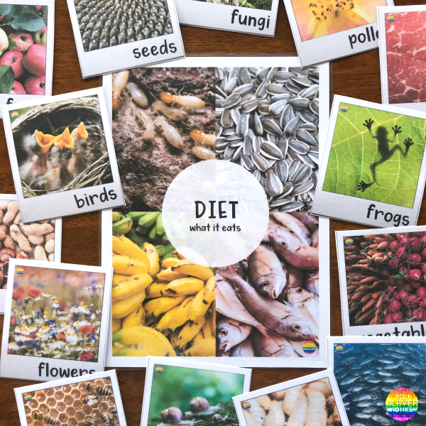 Information Text Writing Word Wall Cards + Posters - DIET